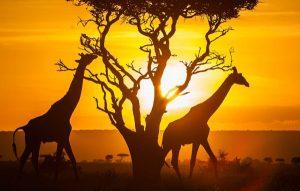 ARTour: Kenya
